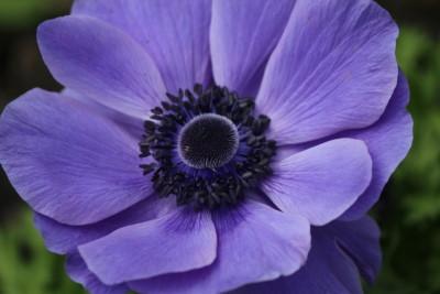 flowers in bloomington indiana